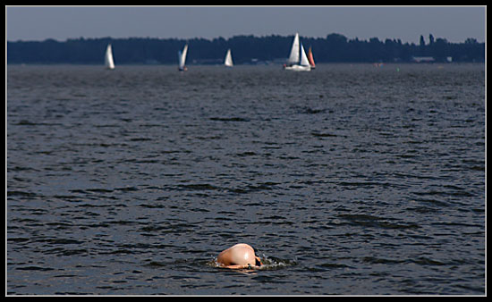 delfin01.jpg