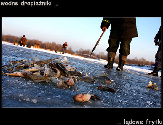 ryby.jpg