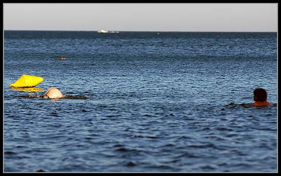 delfin02.jpg